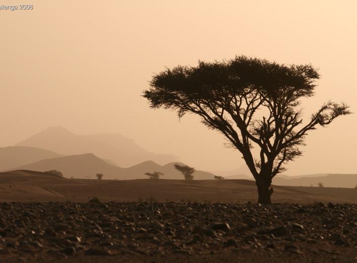 Rallye des Gazelles - Paysages marocains